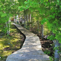 Private Island Wilderness Pathway